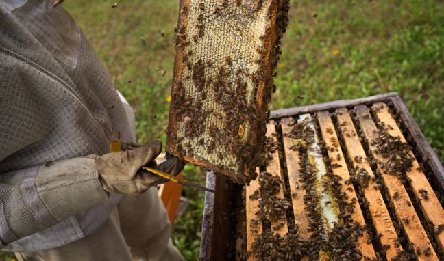 local honey near me